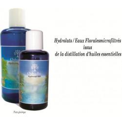 Eau florale Achillée Millefeuille - Achillea millefolium - Bio